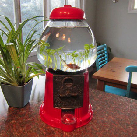 Make a fishbowl with gumball machine Retro